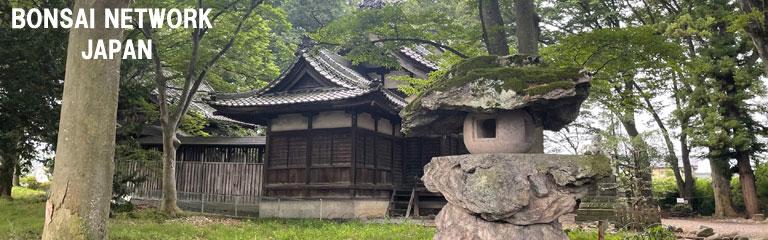 盆栽ネットワーク・ジャパン